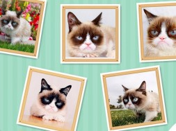 Grumpy Cat paintings The Sims 4